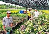 Nhà vườn cung ứng 1,9 triệu chậu hoa kiểng phục vụ tết