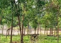Tìm tung tích thanh niên treo cổ trong rừng tràm