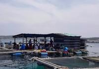 Hàng ngàn cá nuôi trên đảo Phú Quý chết bất thường