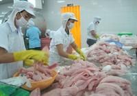 Lùi thời hạn áp dụng VietGAP nuôi cá tra đến cuối 2016