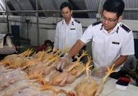 Cấm 5 chất gây ung thư trộn trong thức ăn chăn nuôi