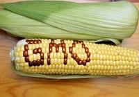 Thực phẩm biến đổi gen phải ghi nhãn rõ 'biến đổi gen'