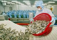 Thiệt hại hàng triệu USD vì Úc cấm nhập khẩu tôm