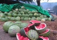 Hàng loạt nông sản Việt 'chết' vì Trung Quốc ngừng mua