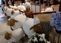 Ở TP.HCM chụp ảnh miễn phí với cừu như Ninh Thuận