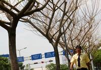 Đề nghị xử lý nghiêm việc dùng hóa chất đầu độc cây xanh