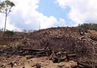 Khởi tố vụ phá hơn 40 ha rừng ở Bình Định
