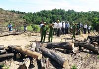 Xử lý nhiều cán bộ liên quan vụ phá rừng ở Bình Định