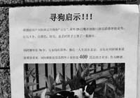 Tìm chó lạc: Hậu tạ căn nhà 13 tỉ đồng