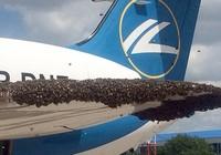 Hàng nghìn con ong 'tấn công' máy bay Nga