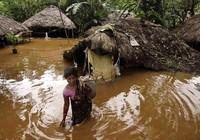 48 người chết trong lũ lụt miền đông Ấn Độ