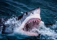 Đi bắt cá, bị cá mập trắng ăn tươi nuốt sống