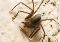 Ba lần phẫu thuật chân vì bị nhện độc cắn trên máy bay