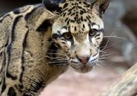 Mỹ phát triển 'sở thú đông lạnh' để ngăn tuyệt chủng