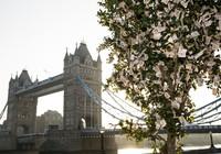 Vì sao cây xanh ở London trị giá đến 204.000 tỉ đồng?