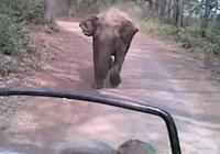 Đứng tim cảnh voi 'điên' đuổi theo xe khách