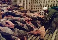 Ecuador bắt tàu Trung Quốc chở hàng trăm tấn cá mập