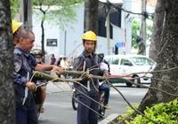 TP.HCM: Chặt tỉa cây xanh có nguy cơ gãy đổ