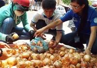 'Giải cứu' hành tây giúp nông dân Đà Lạt
