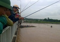 Đổ xô đi câu hàng trăm tấn cá bị sổng trên sông Kinh Thầy