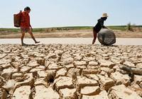 Thủ tướng yêu cầu hỗ trợ 904 tấn gạo cho tỉnh Bình Định