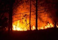 Đại học Đà Lạt đốt thực bì rồi gọi xe cứu hỏa!