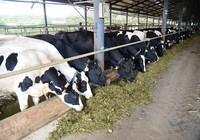 Điển hình thành công trong ngành chế biến sữa