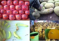 Nhúng trái cây vào hóa chất có thể bị phạt nặng