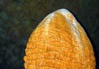 Bí ẩn những hình thù kỳ bí trong hang Phong Nha