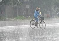Kiếm ăn trong mưa...