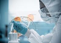 Điều trị ung thư não bằng... virus Zika