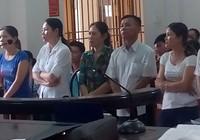 Đề nghị hủy án vụ tám người bị tù vì chặt 12 cây tràm