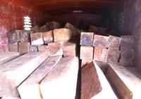 Bắt đầu nậu buôn gỗ lậu bằng hồ sơ giả