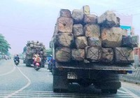 Kiểm lâm nhiều lần giải cứu gỗ lậu