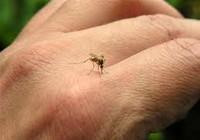 TP.HCM: Số ca sốt xuất huyết ba tháng đầu năm tăng 41%