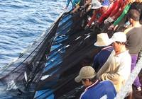Xuất hiện 'cò tàu cá' lừa ngư dân