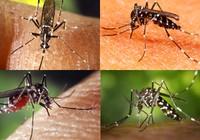 Phun thuốc diệt muỗi khu vực kênh Gia Định