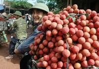 Bám Trung Quốc, nông sản bị rẻ rúng