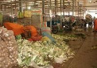 Quản lý chất thải hữu cơ cho TP.HCM