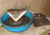 Giải quyết dứt điểm ổ ruồi ở Củ Chi