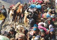 Săn 'Đông trùng hạ thảo' ở Nepal