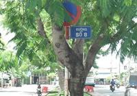 Cột biển báo hư, dựa vào cây