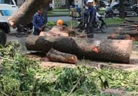 Đốn cây không quan sát khiến một người chết