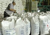 Xuất khẩu gạo sang TQ như 'đánh bạc'