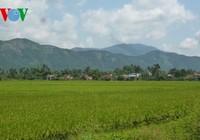 Một làng có đến 120 người chết vì ung thư