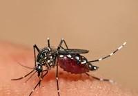 ĐBSCL: Số ca sốt xuất huyết tăng cao