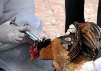 Giám sát chặt cúm gia cầm A/H5N6, không để lây sang người
