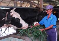 Vào TPP là phải 'đấu' từ miếng thịt, ly sữa