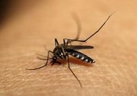 TP.HCM: 121 phường có ổ dịch sốt xuất huyết