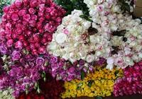 Hoa hồng Đà Lạt tăng giá gấp 3-4 lần trước 20-10